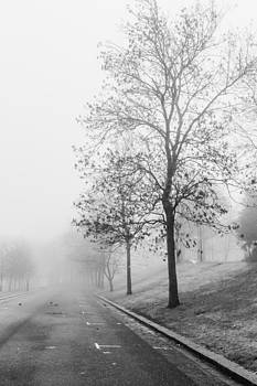 Misty Road by Arianna Petrovan