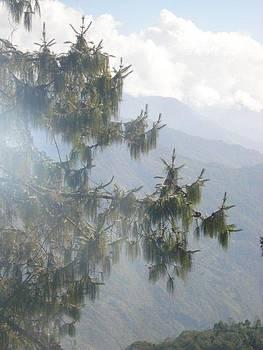 Misty Tree by Aparna Suriaraj