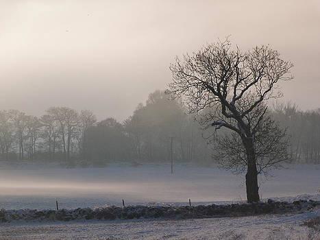 Misty Tree by Jennifer Watson