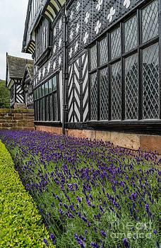 Adrian Evans - Moat of Lavender
