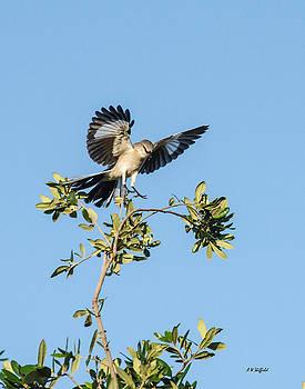 Allen Sheffield - Mockingbird Landing