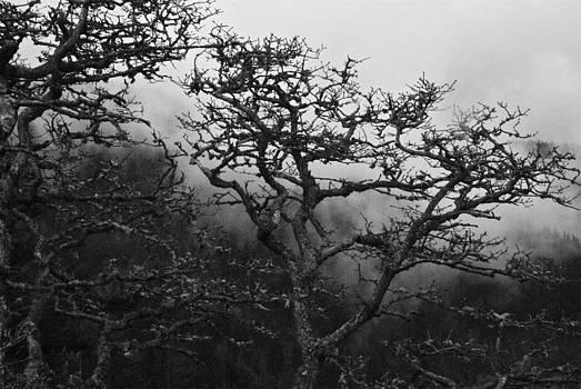 Moist Morning Fog by Rae Berge
