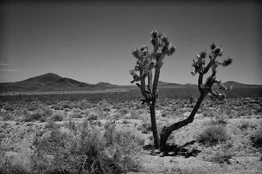Mojave Desert by Eugene Dailey