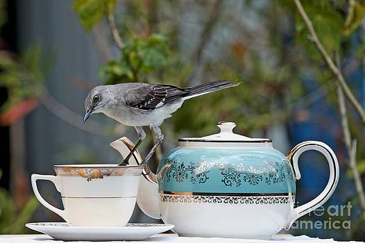 Molly Mockingbird and Tea by Luana K Perez