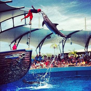 #moment #dolphin #feed Water #miami by Shawn Who