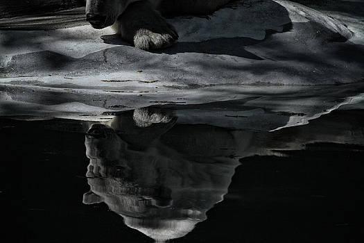 Karol  Livote - Moment to Reflect