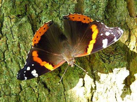 Monarch Butterfly by David Lankton