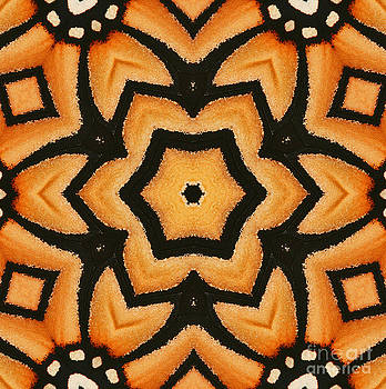 Monarch Butterfly Wing Kaleidoscope by Cindi Ressler