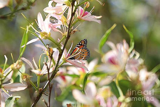 Monarch by Kevin Ashley