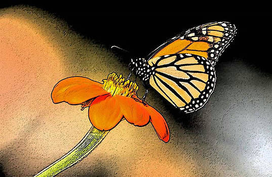 Monarch on Mexican Sunflower by Cheryl Ann Quigley