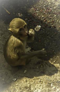 Monkey by Jennifer Burley