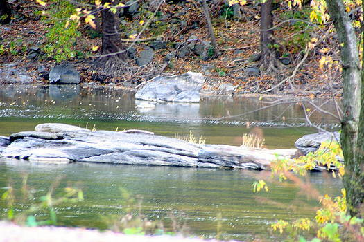 Monocacy River by Bess Yearsley