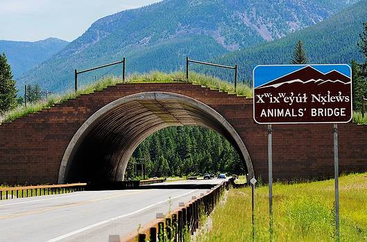 Kae Cheatham - Montana Highway - #2 Animal