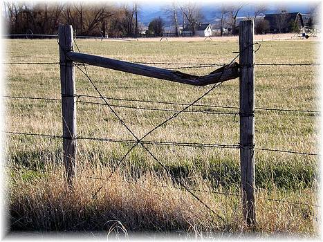 Montana Horse Fencing by Misty Ann Brewer