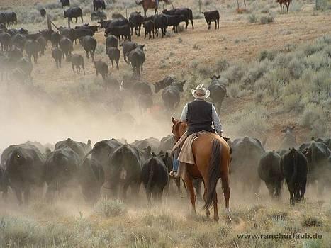 Montana Working Ranch by Steffi Pilz