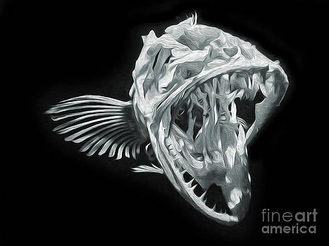 Gregory Dyer - Monterey Bay Aquarium - Fish Bones - 02