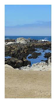 Monterey Bay by Cindy Bettinger