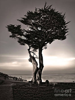 Gregory Dyer - Monterey California - 02