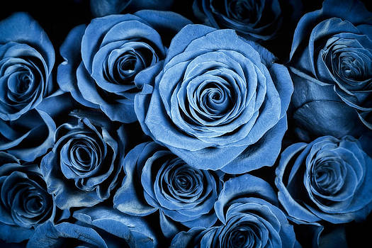 Adam Romanowicz - Moody Blue Rose Bouquet