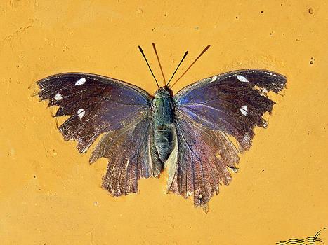 Moody Moth by Jose Francisco Abreu