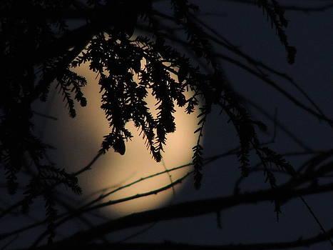 Moon marble by Karen Horn