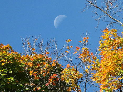 Moon Over Autumn Leaves by Michele Wilson