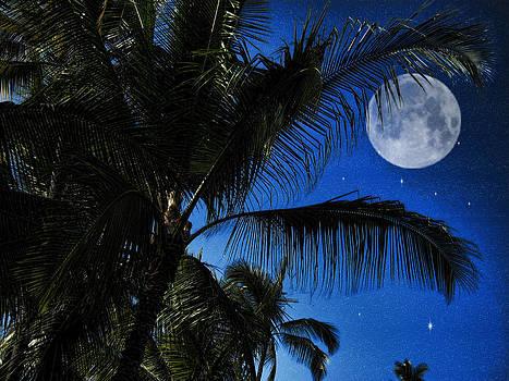 Cindy Boyd - Moon Over Palm Trees