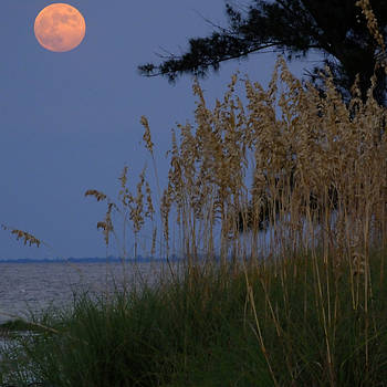 Moon Rising over Anna Maria Island by Rolf Bertram