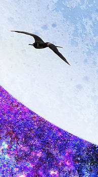 Moon Seagull by Jose Francisco Abreu