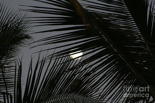 Moon  Through Palm Trees by Mary Mikawoz