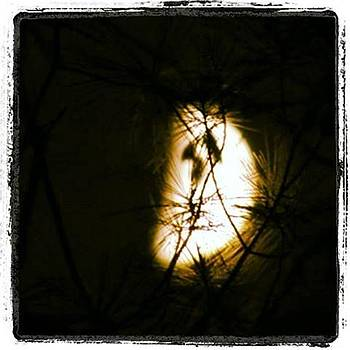 Moon Through the Pines by Pamela Stone