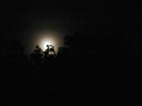 Moon Through The Trees by Pamela Morrow