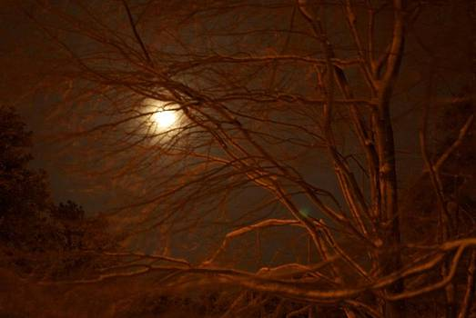 Moonlight  by Gina Patton