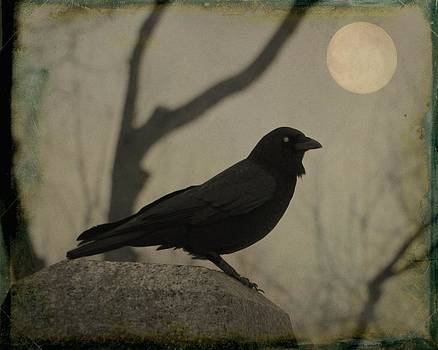 Gothicolors Donna Snyder - Moonlit Crow