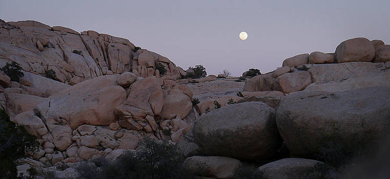 Moonrise Over the Desert by Lynn Wohlers