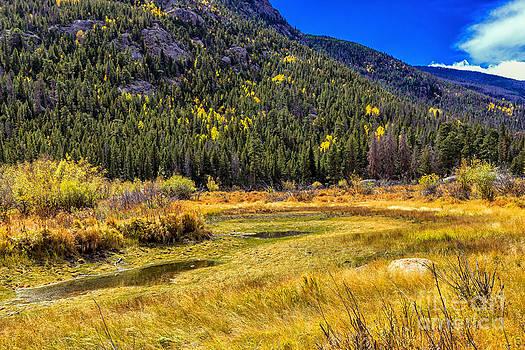 Jon Burch Photography - Moose Country
