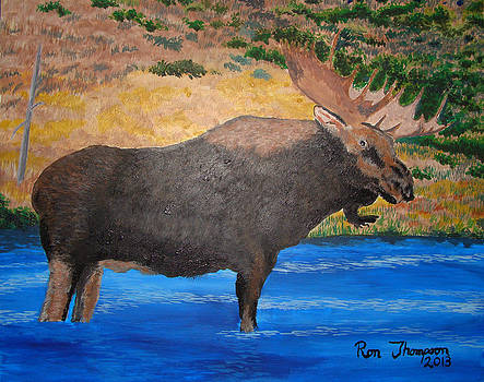 Moose King by Ron Thompson