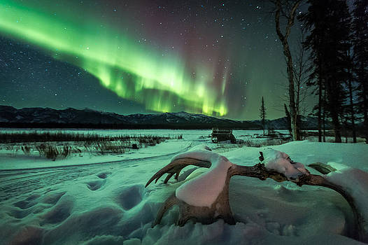 Moose Light by Chris Multop