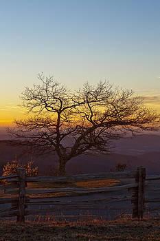 Mornin' Glory by Nicole Robinson