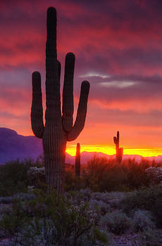 Saija  Lehtonen - Morning Arizona Style
