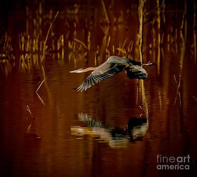 Heron Flying Through Rusty Bog by Robert Frederick
