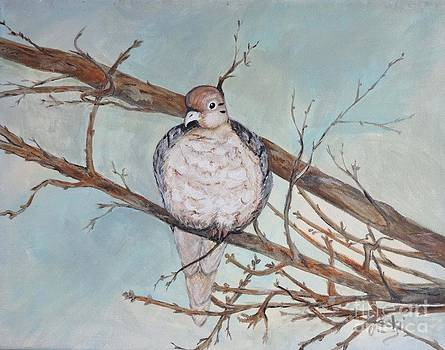 Morning Dove by Jacki McGovern