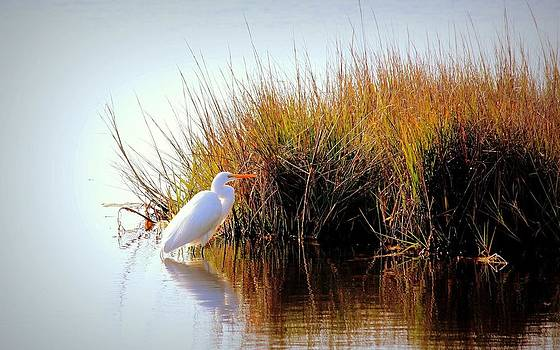 Rosanne Jordan - Morning Egret