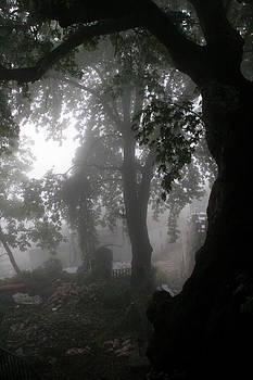 Morning Fog by Arie Arik Chen