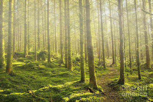 Morning fog in the forest by Gry Thunes