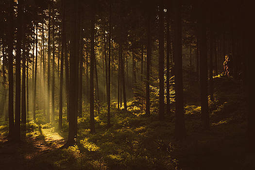 Morning forest by Tomas Hudolin