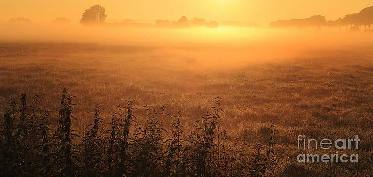 LHJB Photography - Morning has broken