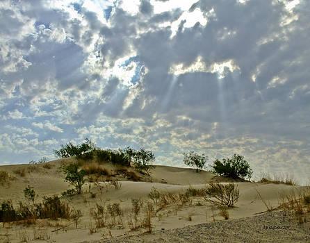 Allen Sheffield - Morning in the Desert