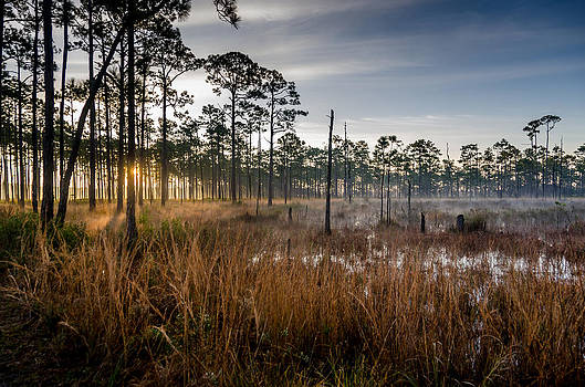 Morning in the woods by Don L Williams