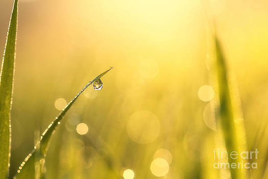 LHJB Photography - Morning jewel